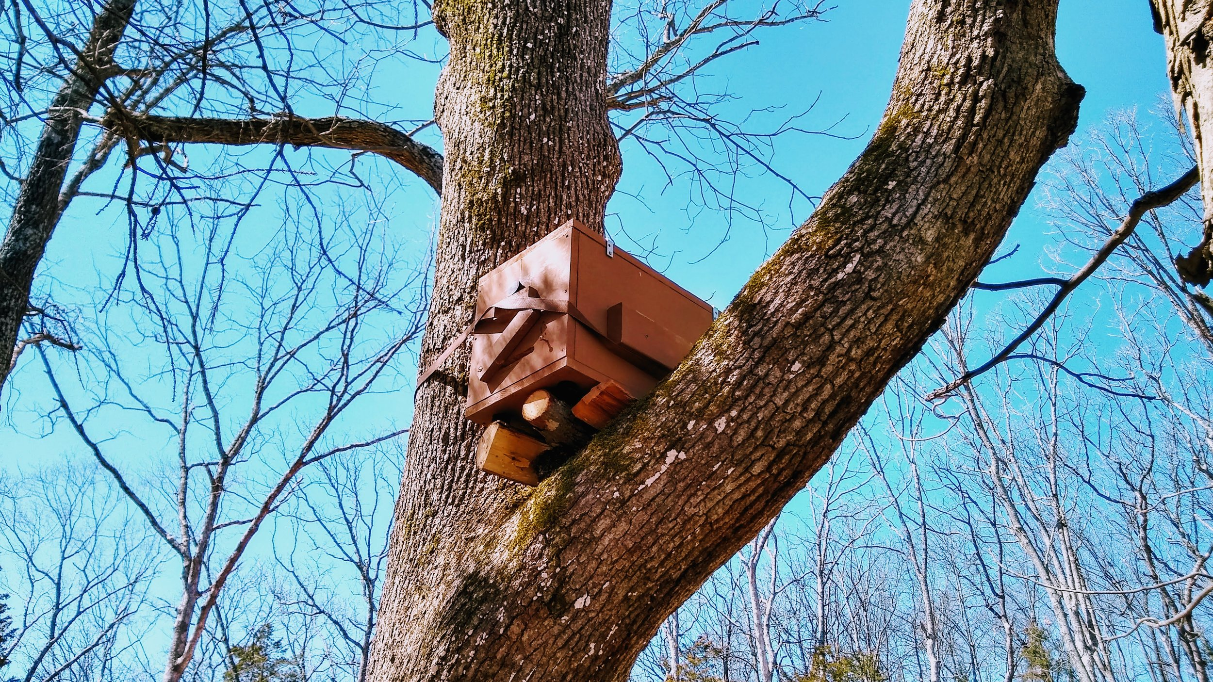 A swarm trap hung in a tree