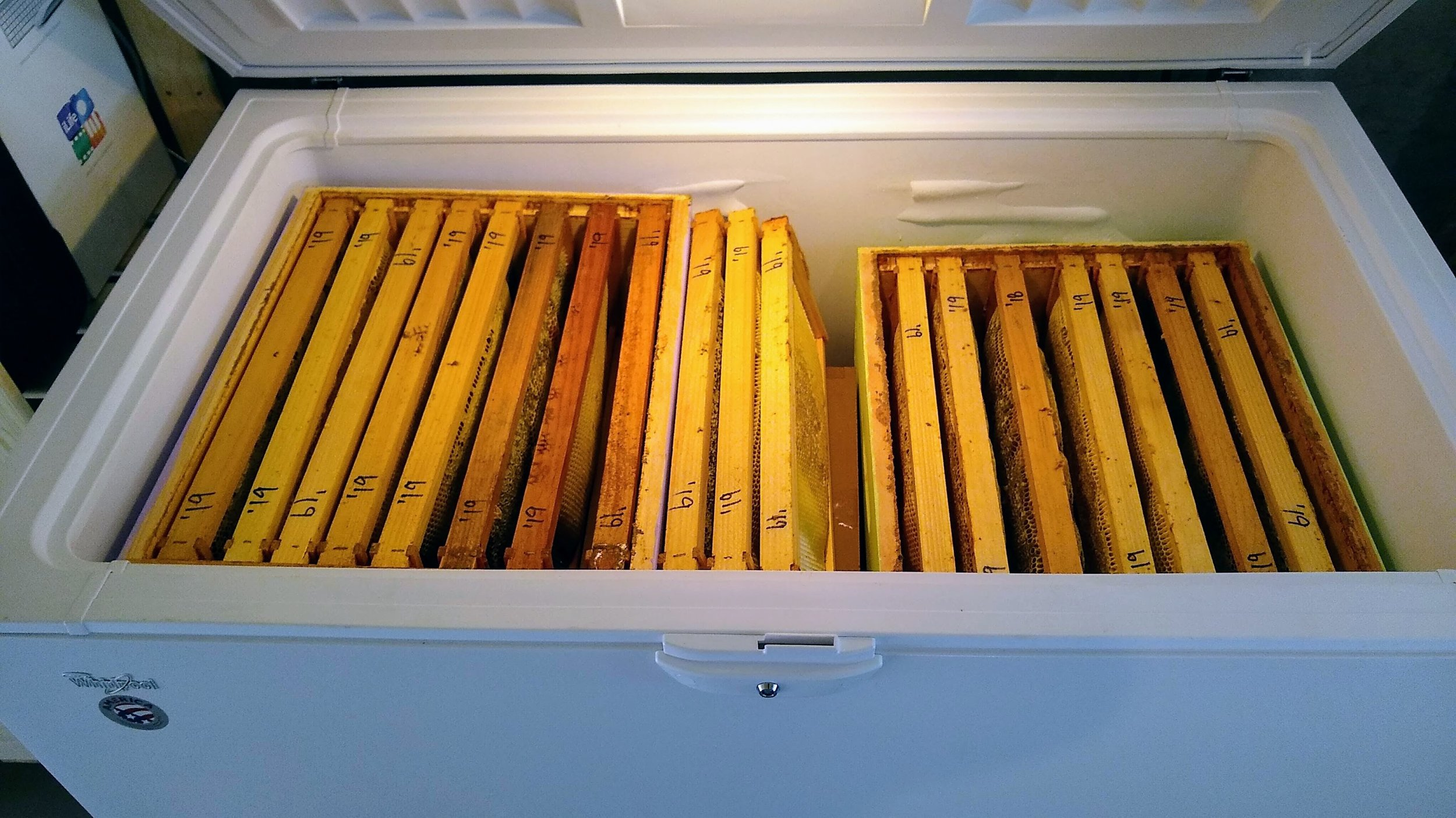 A batch of honey supers—each weighting about 50 pounds—in the freezer awaiting extraction