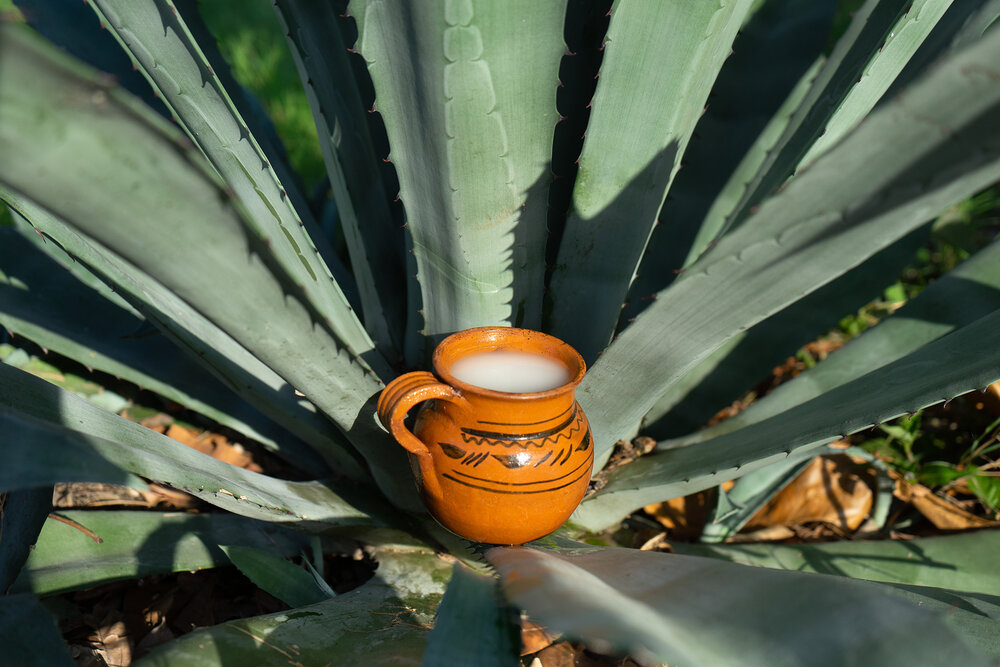 What Is Pulque? How To Drink and Where To Find It | Happy Hour City