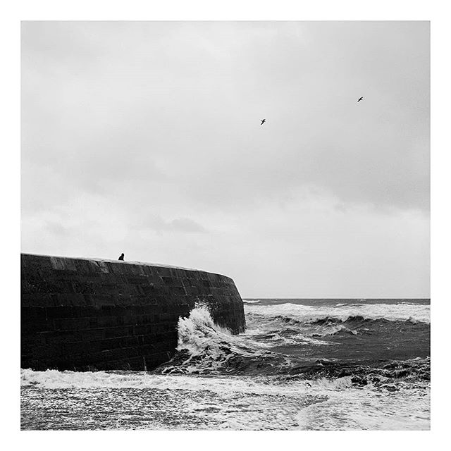@borishallvighere on the last day of my takeover. I'm postingimages from my first long form photographic project, Seasonal Blues. A series of portraits and landscapes documenting rural life in the South West,during the short light and long months of winter. This image is of Lyme's famous harbour wall, the cobb, in stormy winter seas.  Taken on a #Yashicamat124g and #acros100 film. And scanned on Photographique's fancy new Flextight scanner.  #film #filmfeed #filmphotography #analog #anaoguephotography #analogueforever #mediumformat #120film #landscape #thecobb #lymeregis #landscapephotography #documentaryphotography #dorset #photographiqueuk