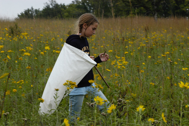 The College School Butterfly Project at Shaw Nature Reserve