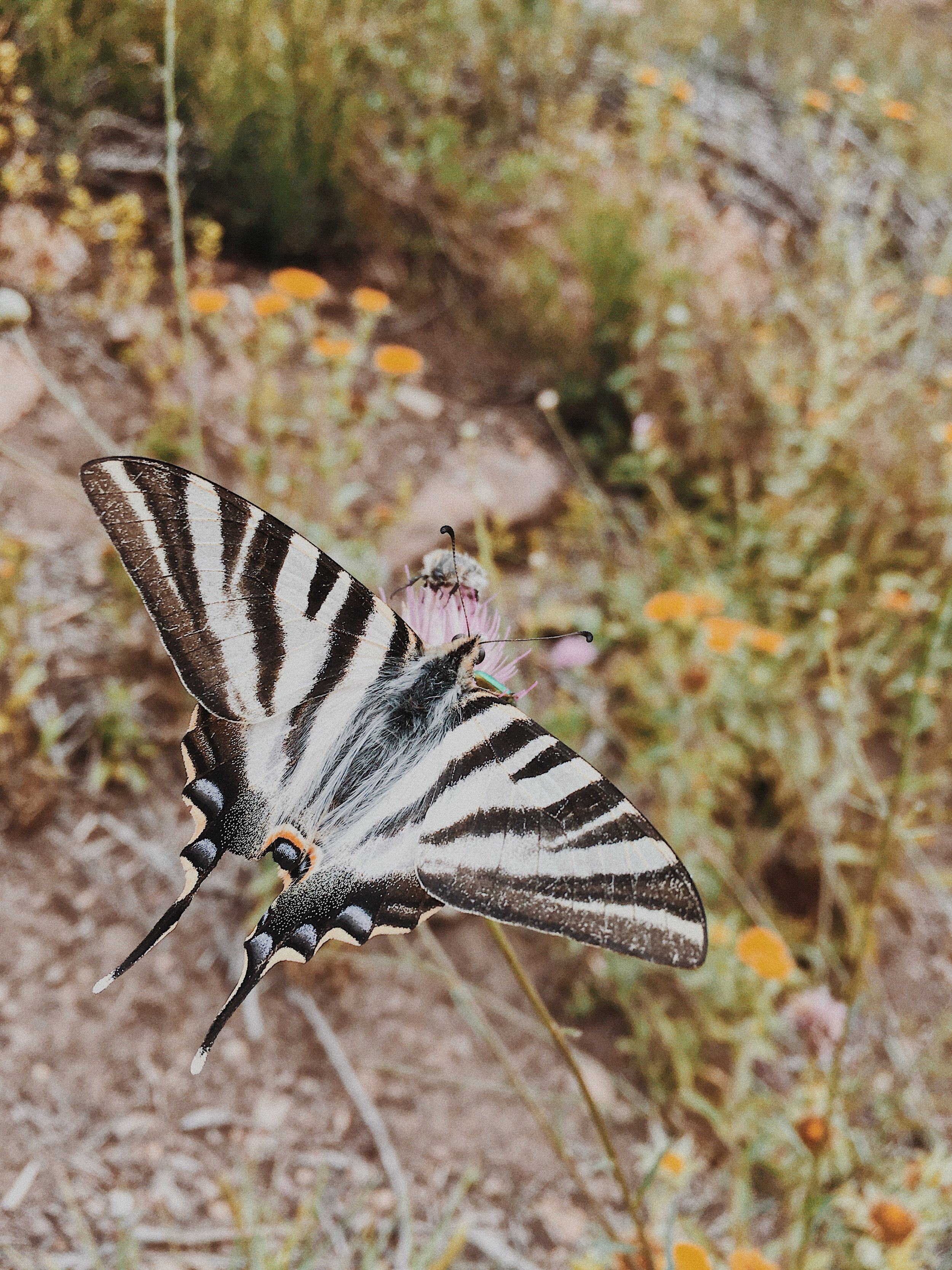 Una mariposa (they were all along the hiking trail!)