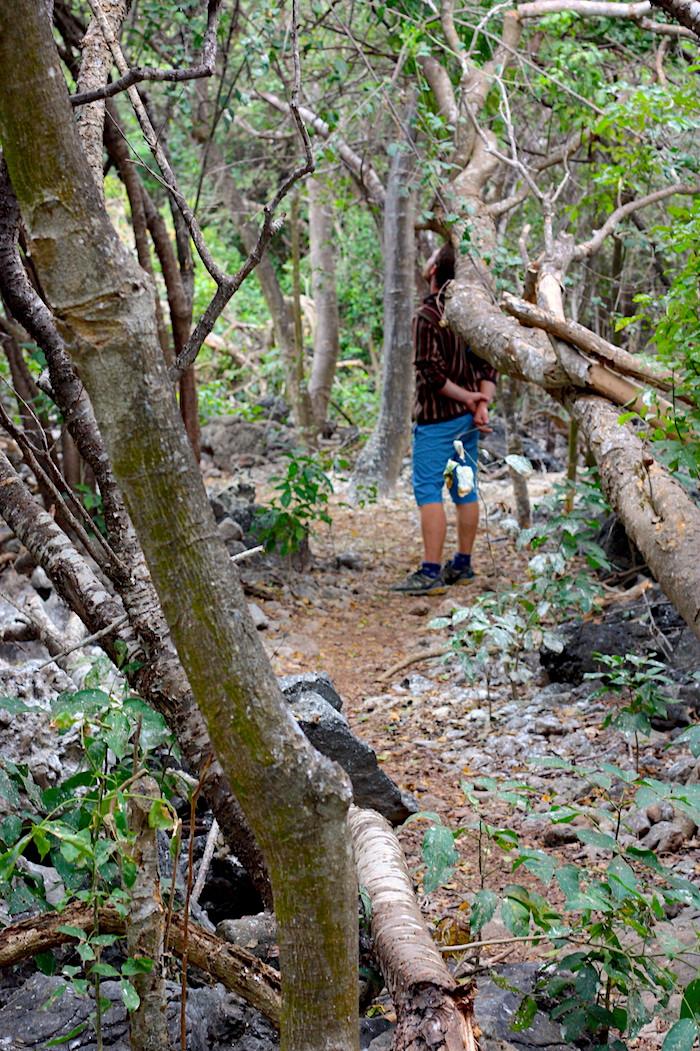 nature=walk.jpg