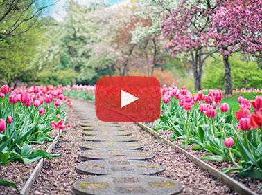 Spring zen -