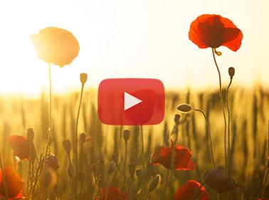 Sunrise sounds -