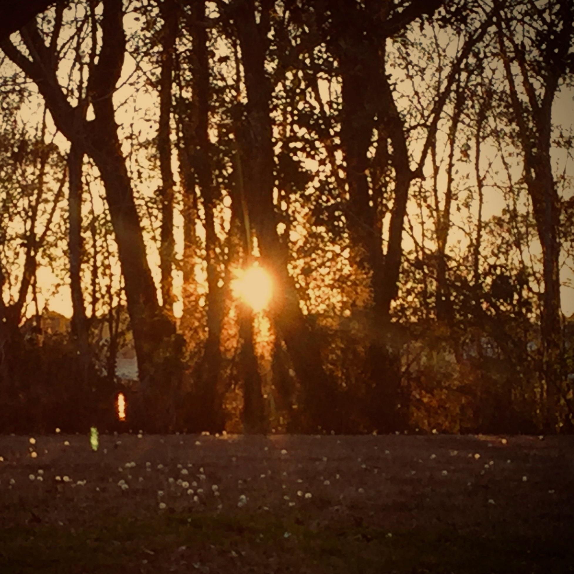 Sunset+study+through+trees.jpg