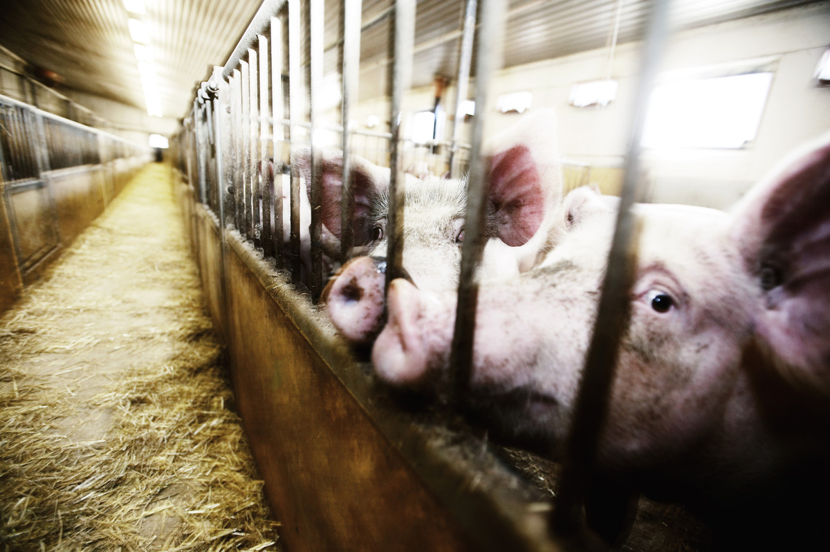 In 2011, 80% of all antibiotics in America were given to livestock - NY Times