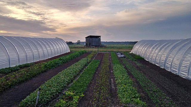 While completing and moving into our new house is at the top of our list for the next five weeks; this view from our current home will be hard to beat.  #natureninefarms #marketgarden #currenthomeview #rvlife #pasturedeggs #pasturedpoultry #hencoop #hylinebrown #redsexlink #eggmobile #growninsoil #smallfarm #organicallygrown #eatlocal #supportlocal #visitfoley #orangebeach #gulfshores #fairhope #southalabama #loweralabama #visitalabama #daphnealabama #easternshore #eatwell #baldwincounty #mobilealabama #pensacola #magnoliasprings