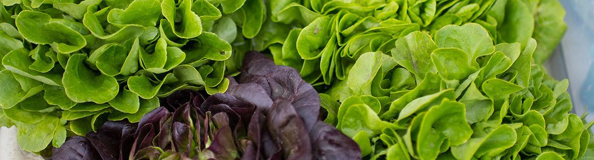 local-lettuce-1200x324.jpg