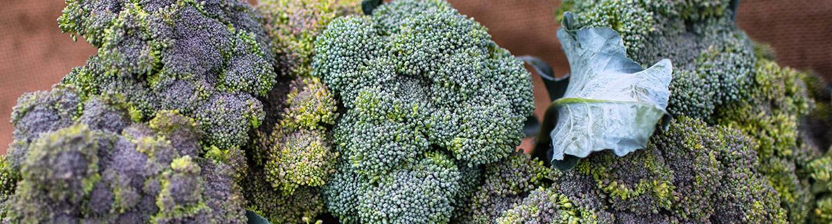 local-broccoli-1200x324.jpg
