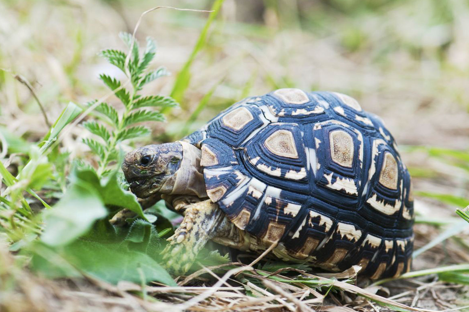 Care Sheets - Learn how to care for your turtle or tortoise