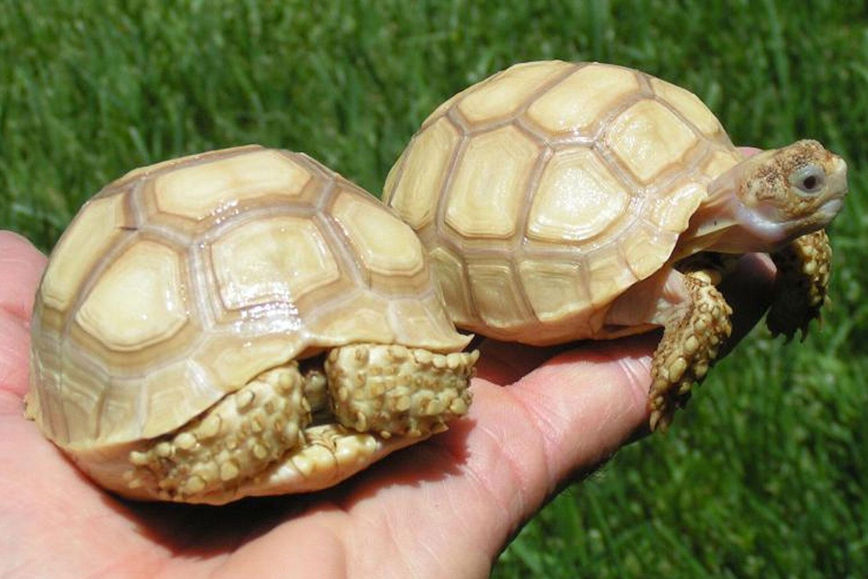 Friday Meeting San Diego Turtle Tortoise Society