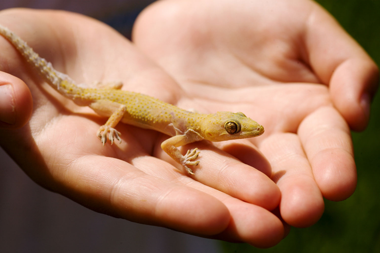 San-Diego-Reptile-Care.jpg