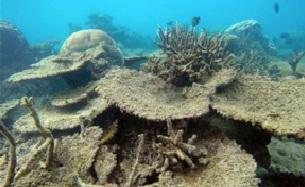 coral-2.jpg