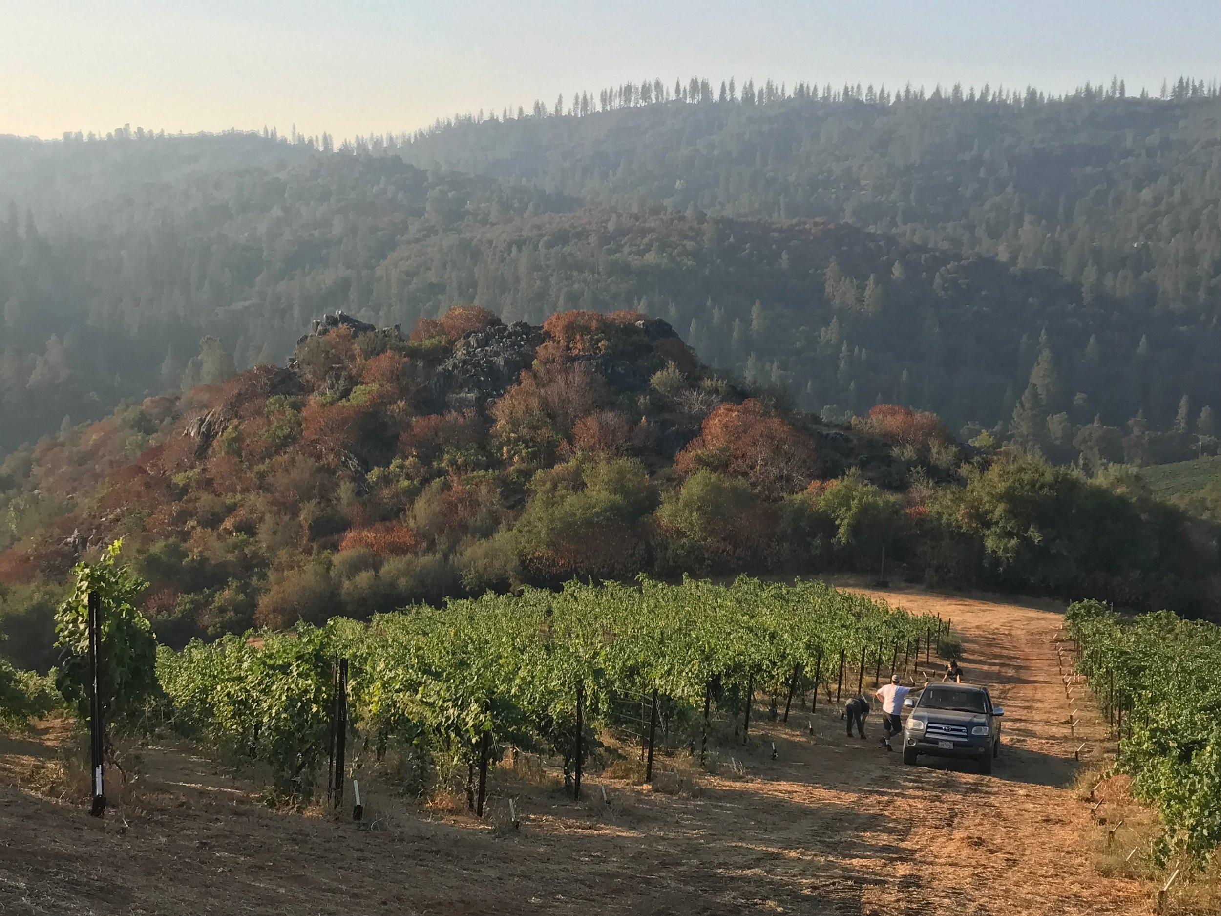 Rorick Hertiage Vineyard Harvest Day.jpg