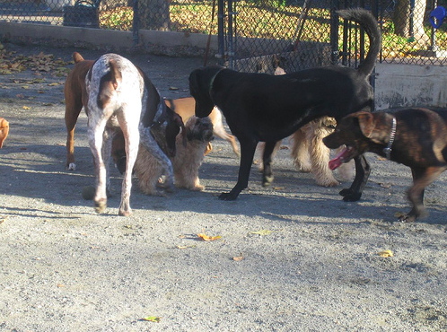Letting dogs mob another dog when they enter the dog park is a no-no.