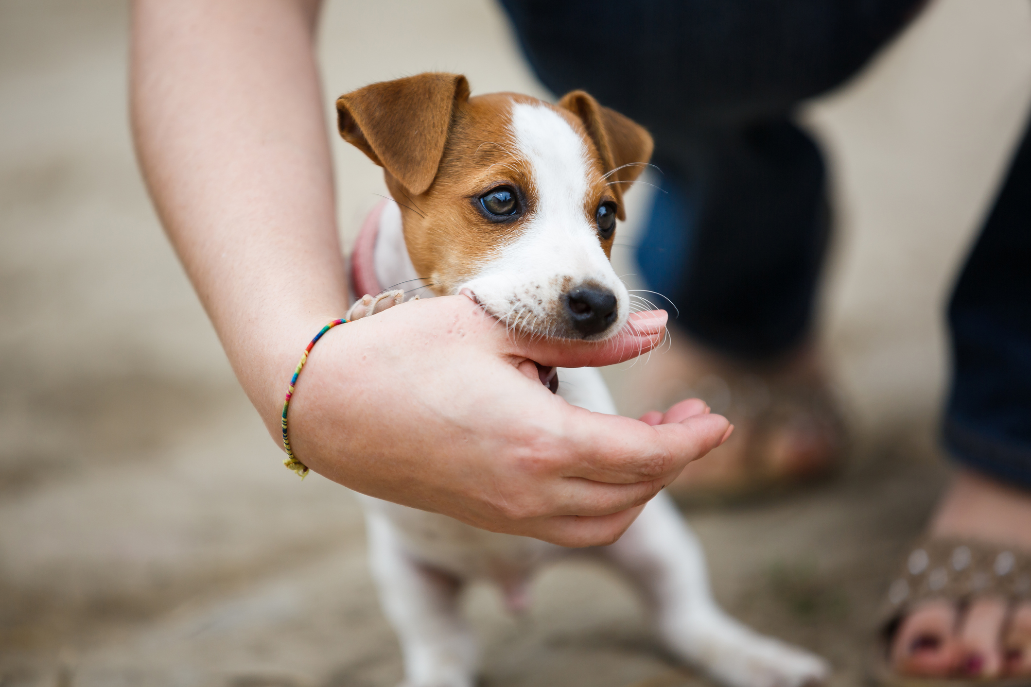 Puppy Training in Los Angeles: Train A Puppy Not To Bite With The Best Dog Trainer In Los Angeles.