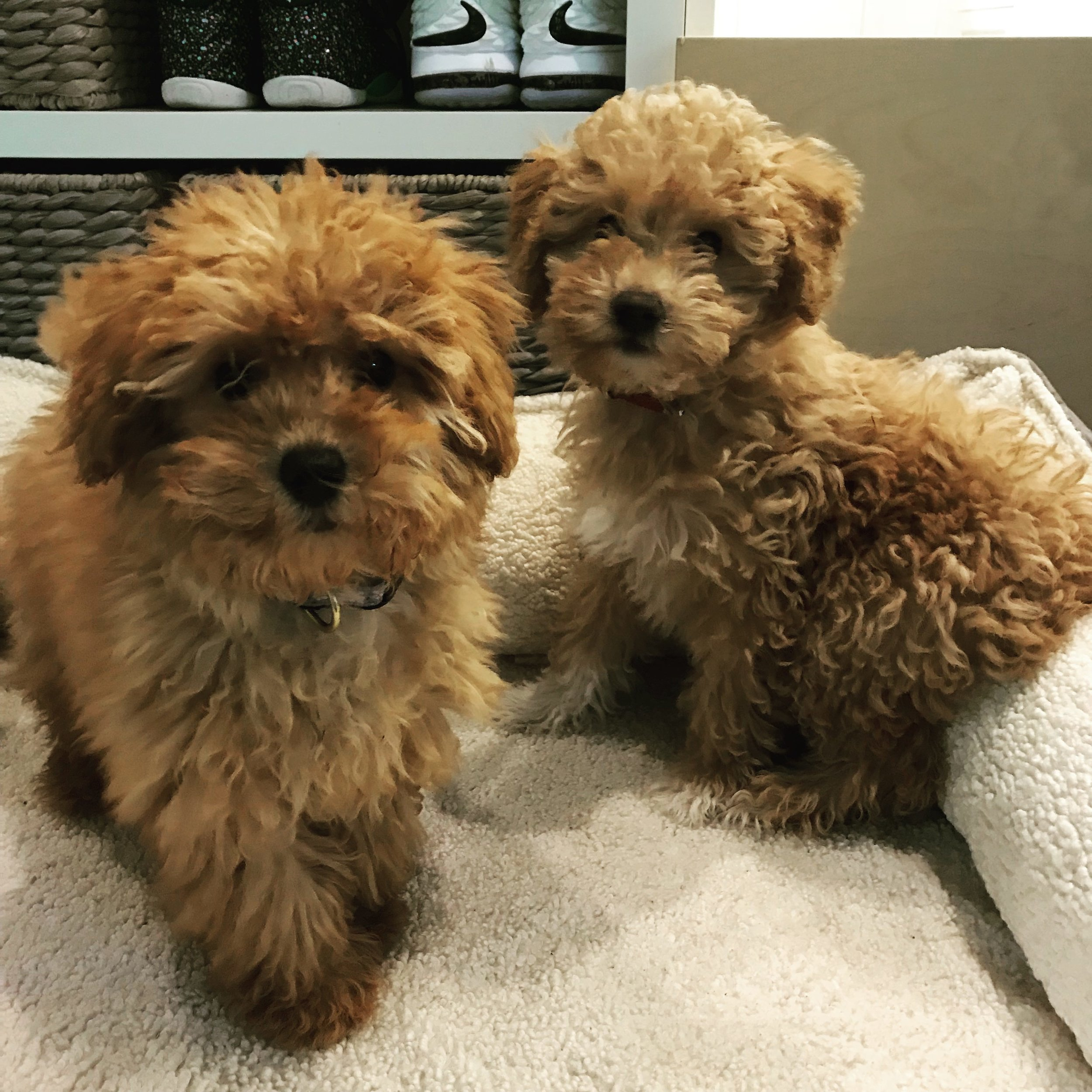 Puppy training should include a solid puppy socialization plan. There are lots of puppy classes offered in Los Angeles.