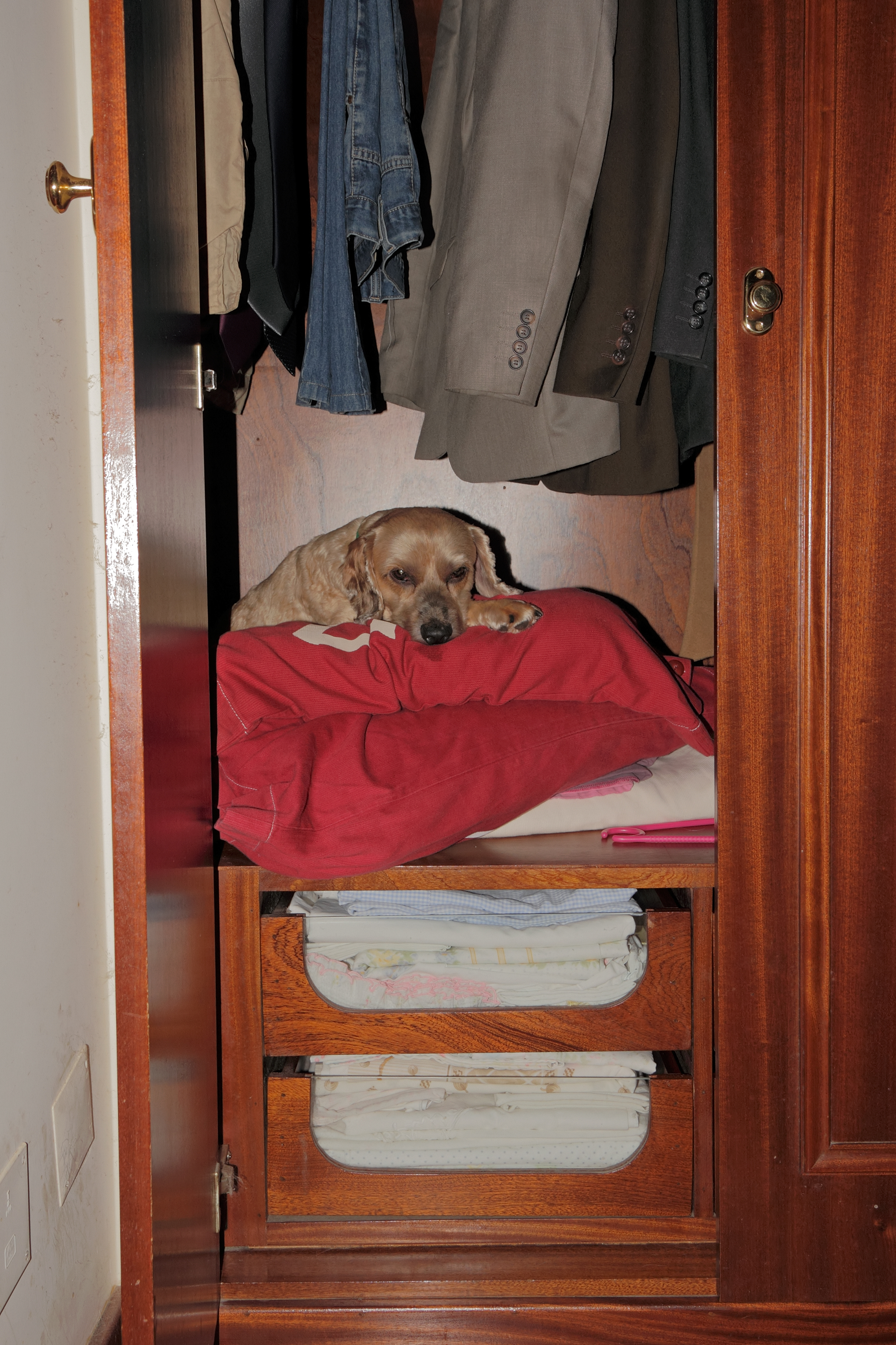 Dog training tips: turn your closest into a den for your fearful dog or puppy on the 4th of July.