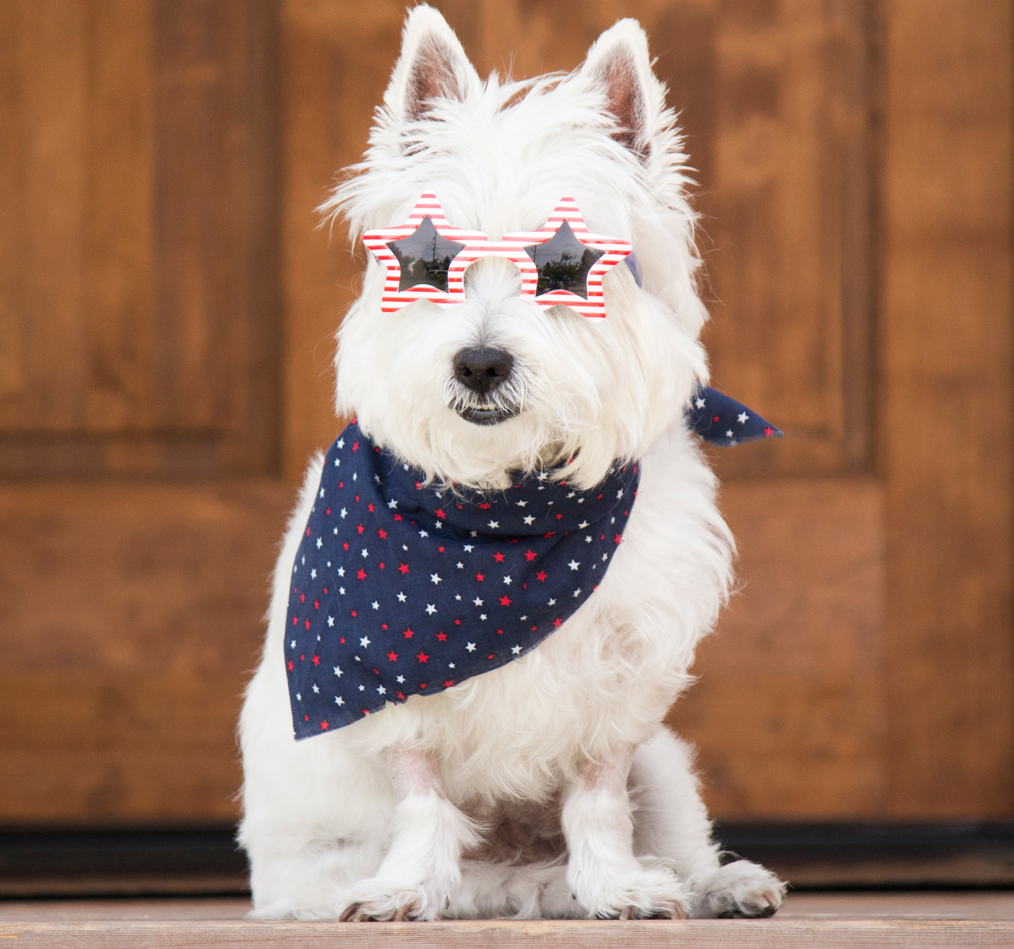 Dog training tips: Get your dog used to fireworks by playing them audio recordings of fireworks before the 4th.