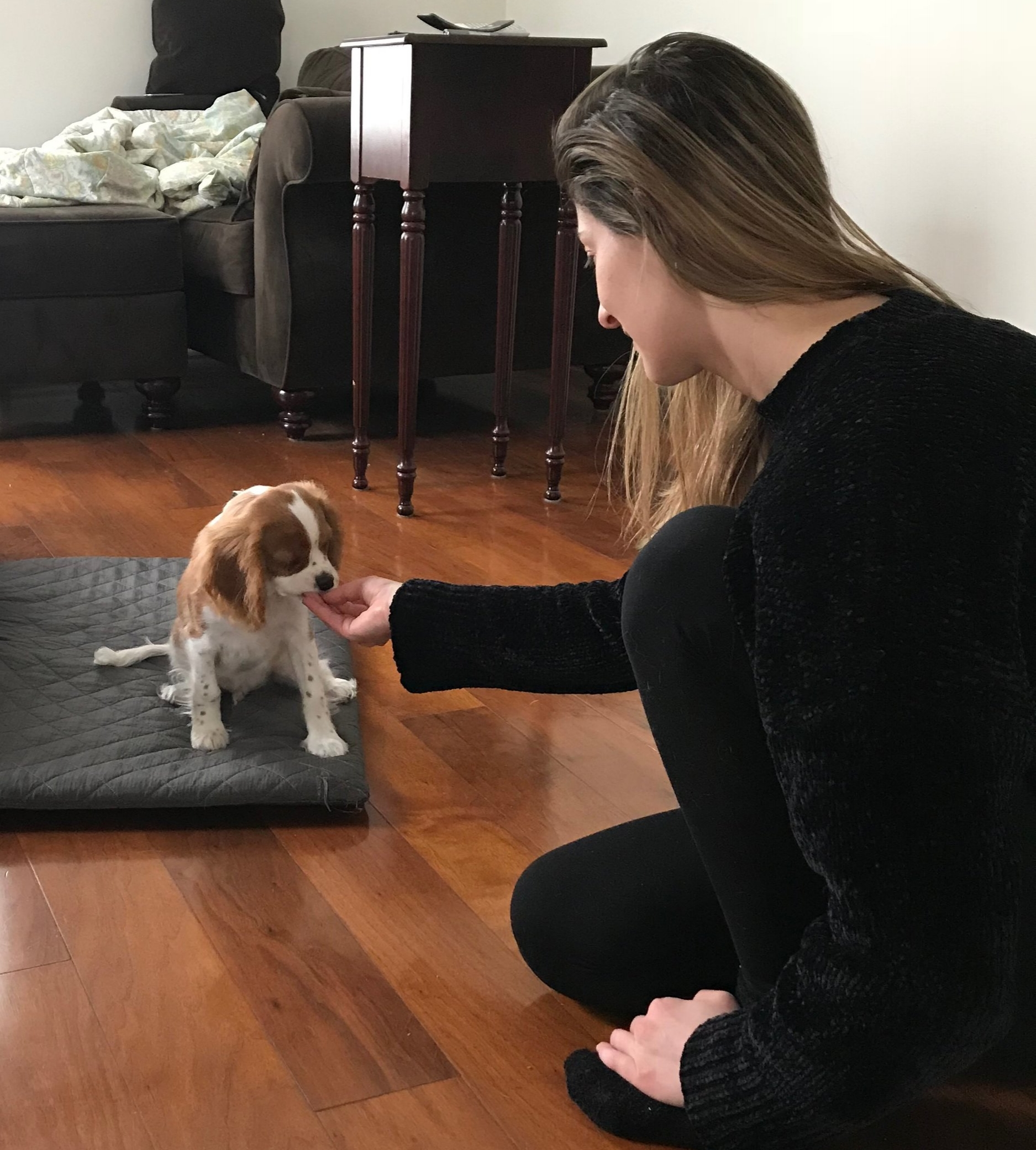 The best dog trainer in Los Angeles offering affordable private puppy training classes in Los Angeles.