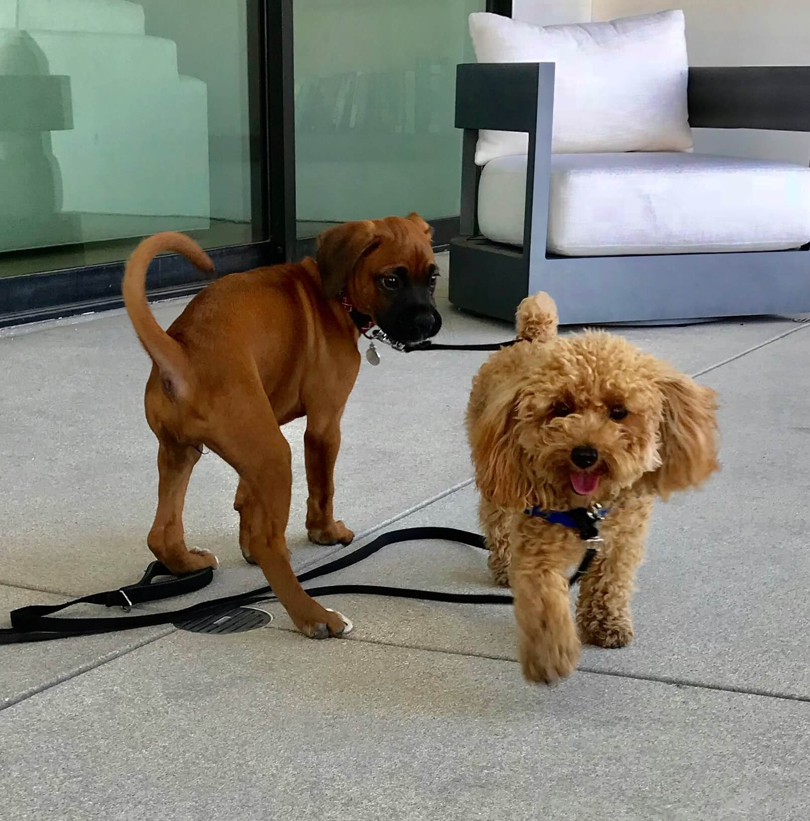 Puppies learn from other puppies and adult dogs about canine communication. That's why it's important to socialize them early so they can learn how to read other dog's body language and signals and feel comfortable around other dogs.