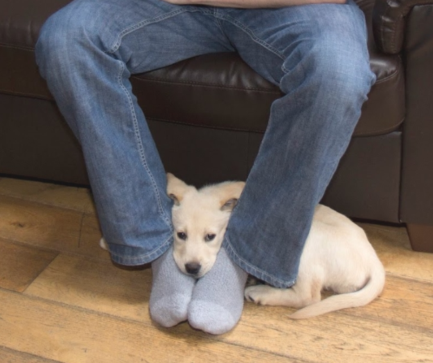 Separation Anxiety in dogs can manifest as a dog or puppy laying at your feet.