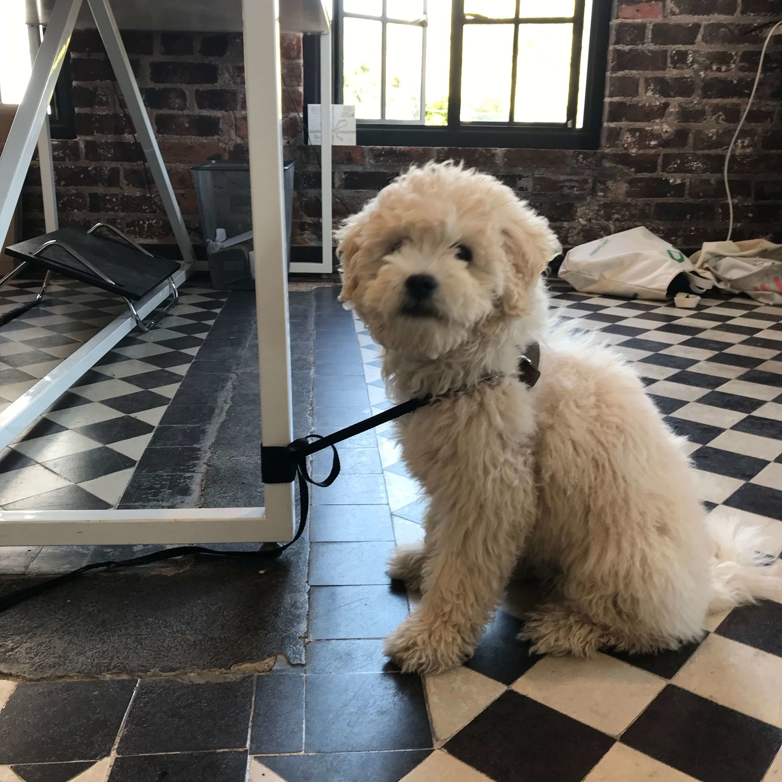 Puppy with dog separation anxiety learning to settle down with dog trainer, Alexandra Bassett, of Dog Savvy Los Angeles.