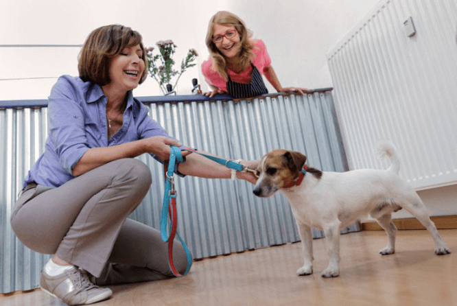 When using doggie decompression at a daycare or boarding facility, it's important to find a quiet space to do the training.
