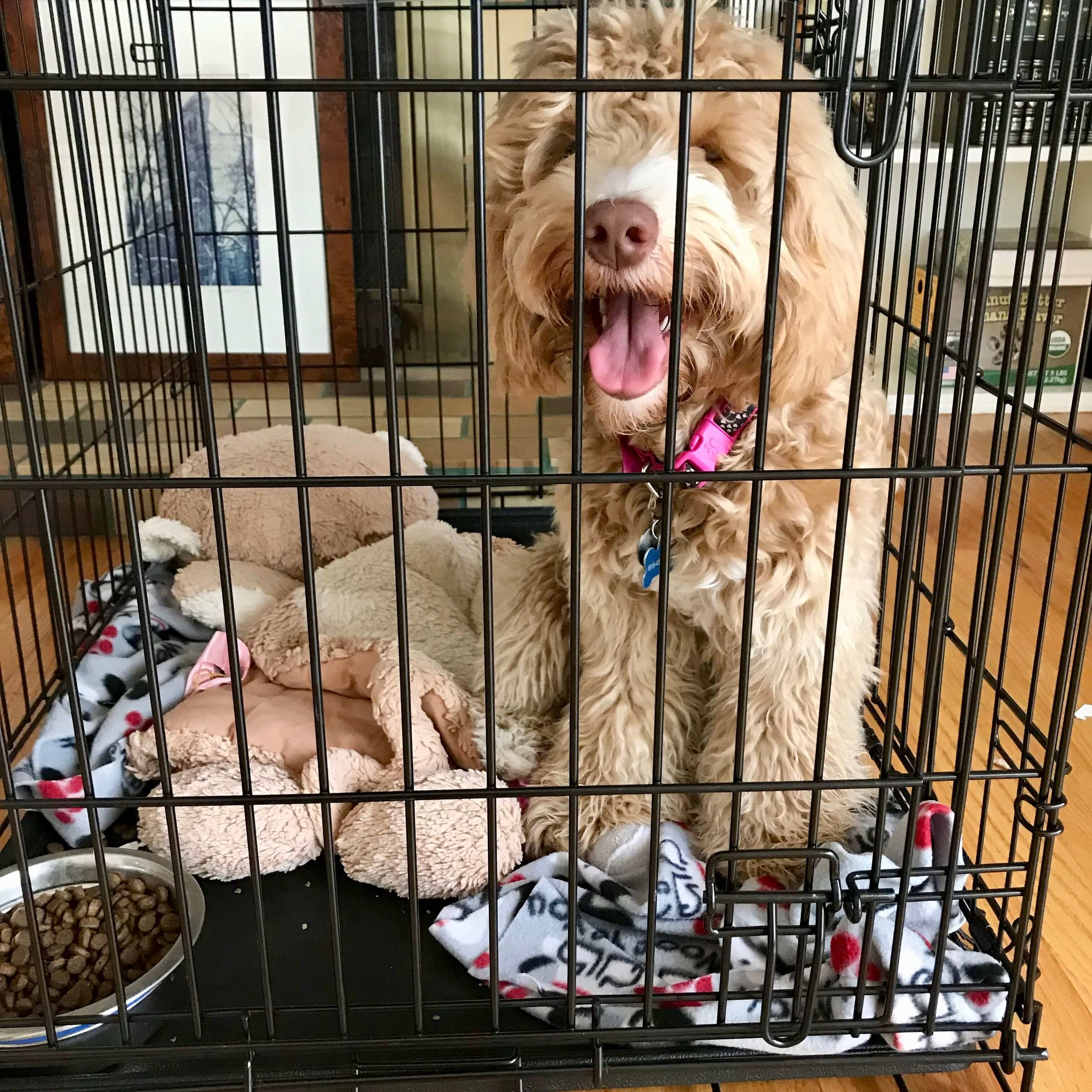 Step 1: To start the calming process, put a dog or puppy in a crate and remain nearby, sitting on the other side of the crate door, but withdrawing all engagement like eye contact, petting, and talking.
