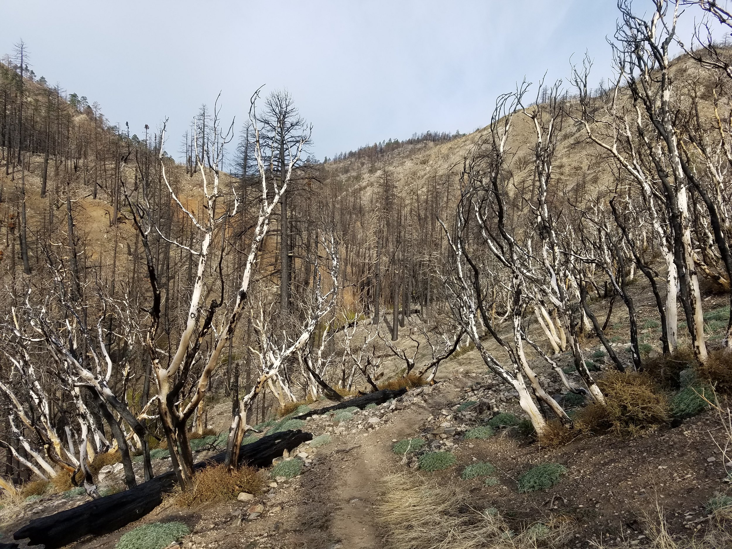 Hiking through the Lake Fire closure, all NOT 16 miles of it.