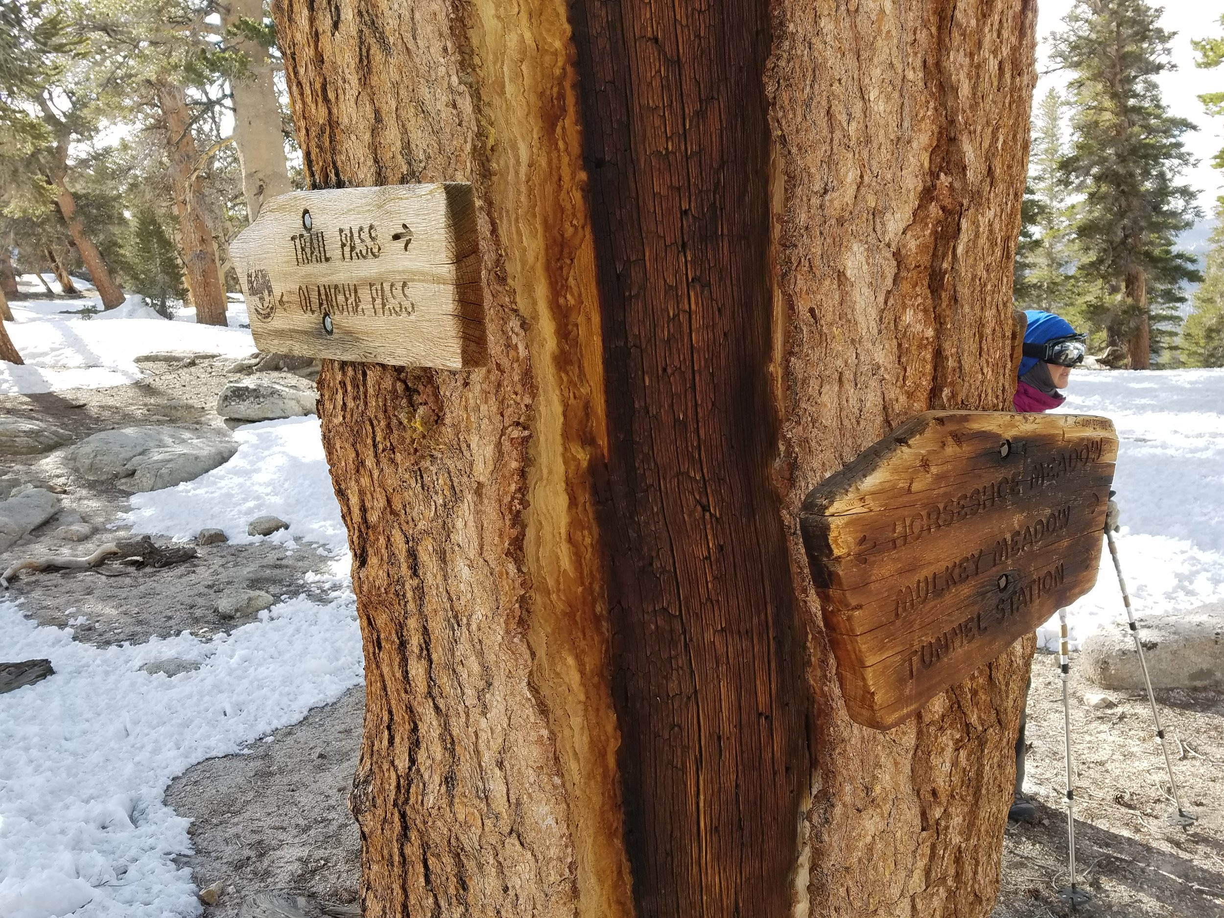 Trail sign at Mulkey Pass headed to Trail Pass, our first potential bail point.