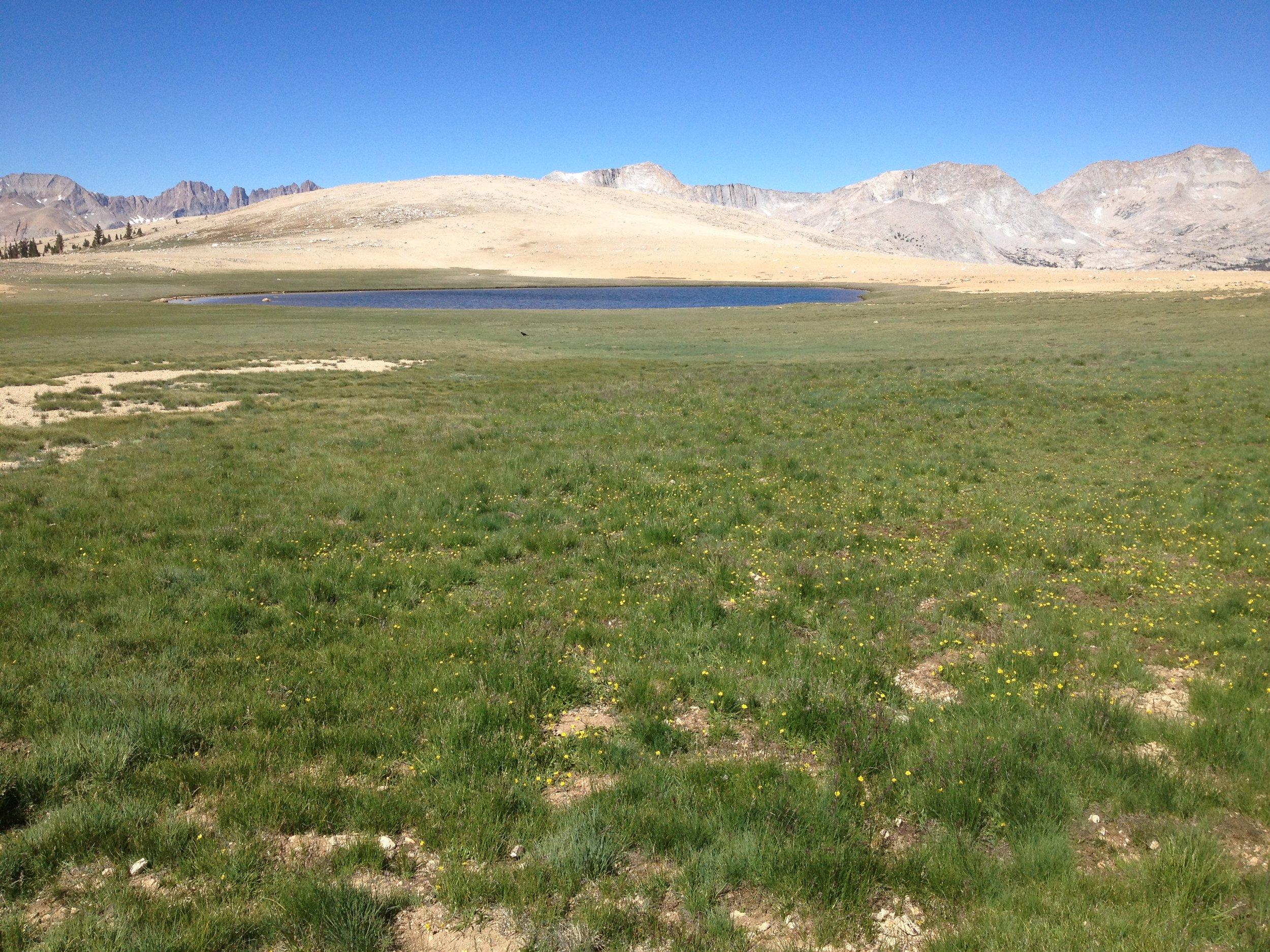 Big Horn Plateau in June 2014.