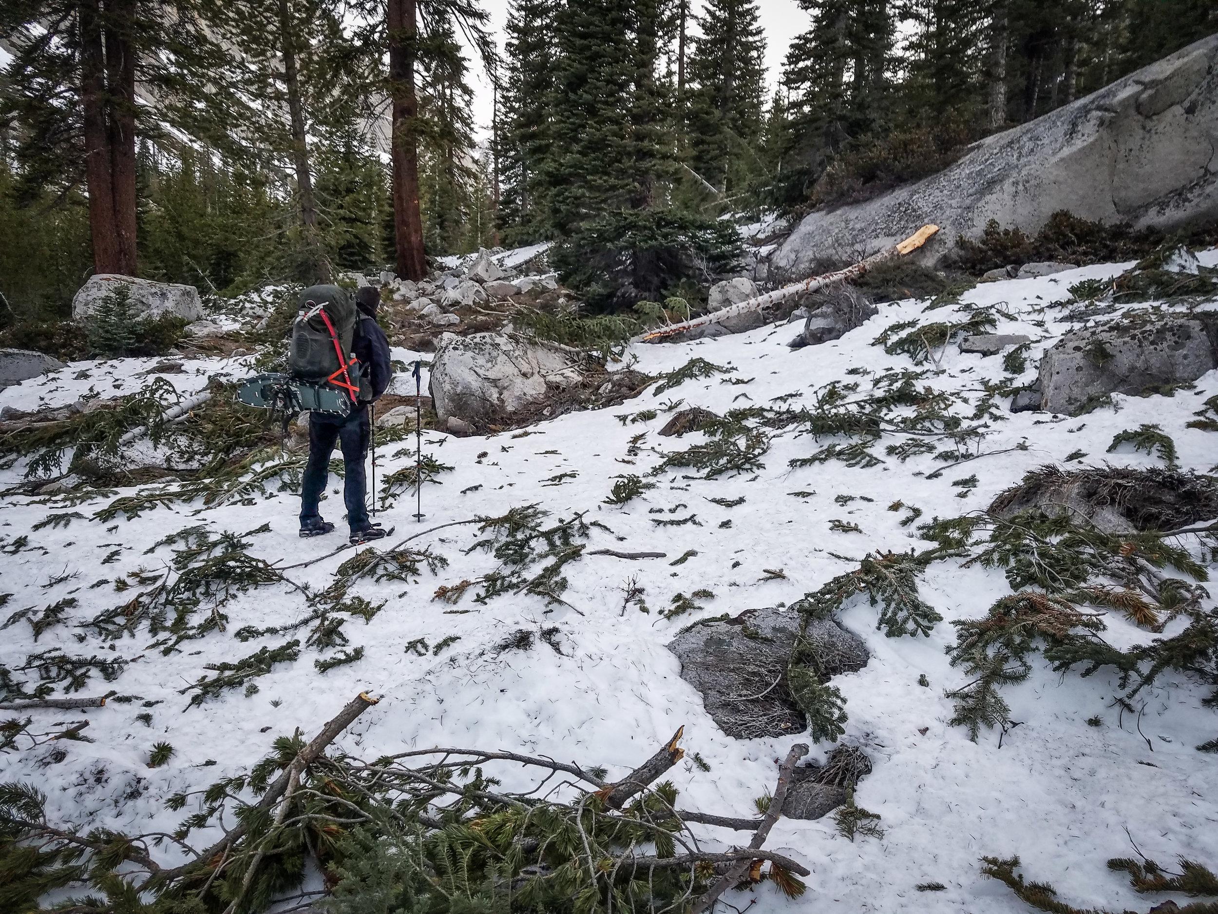 Avalanche debris in Le Conte Canyon.