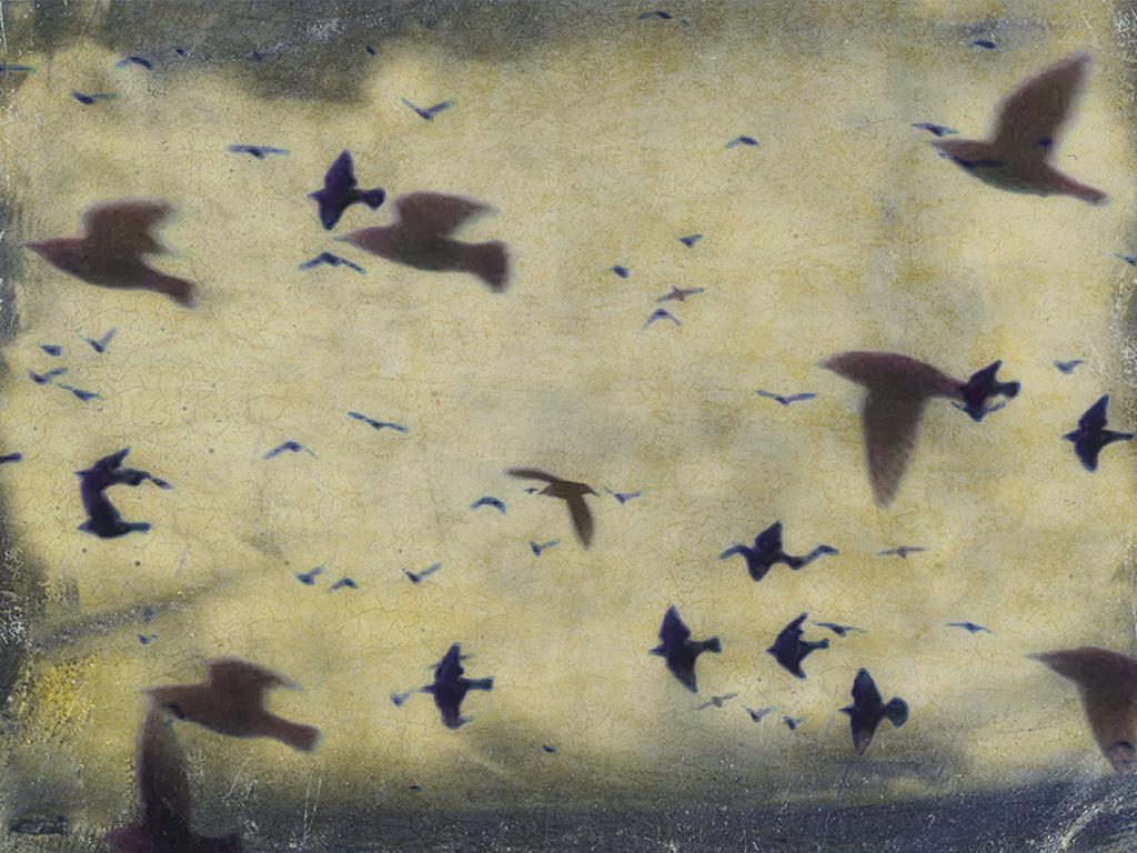 Melinda Isachsen JANIS Photography & Fine Art migration starlings Rome Italy