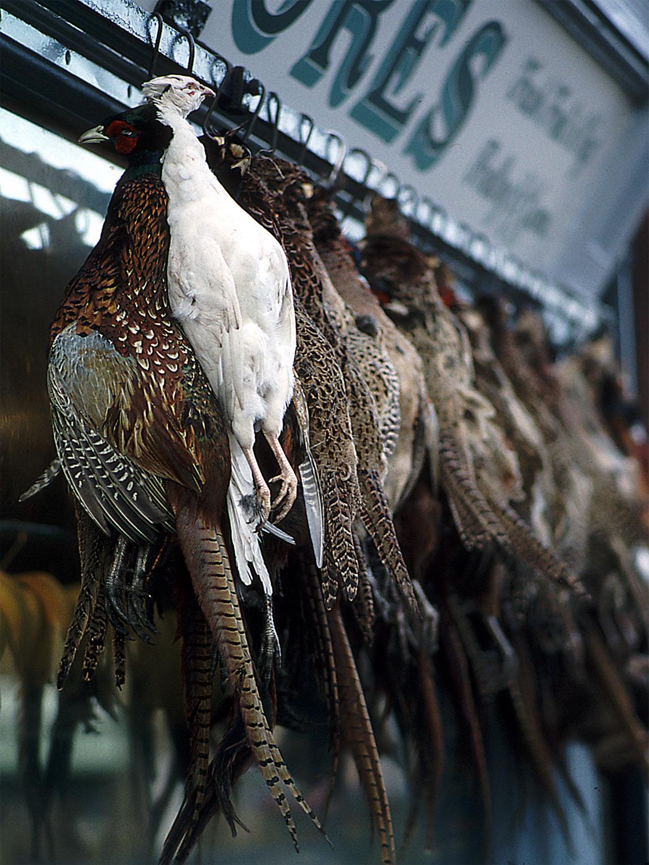Melinda Isachsen JANIS Photography & Fine Art fowl market England