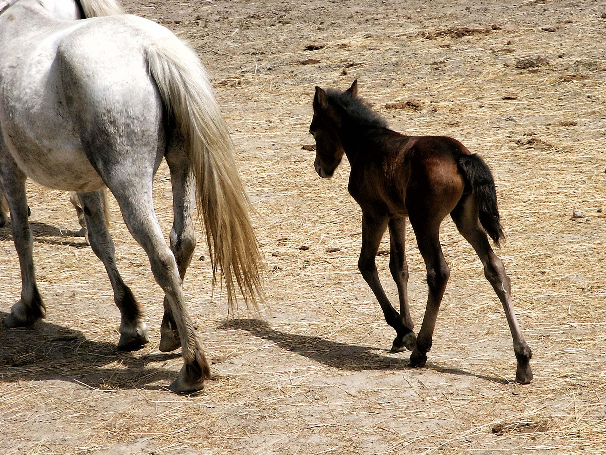 Melinda Isachsen JANIS Photography & Fine Art horses Camargue Provence France