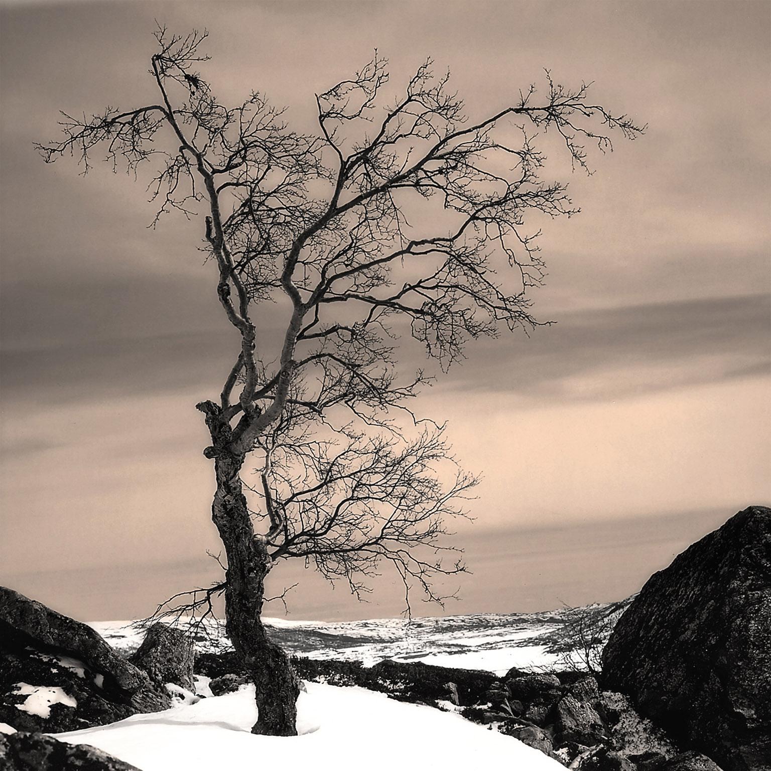 Melinda Isachsen JANIS Photography & Fine Art Norway