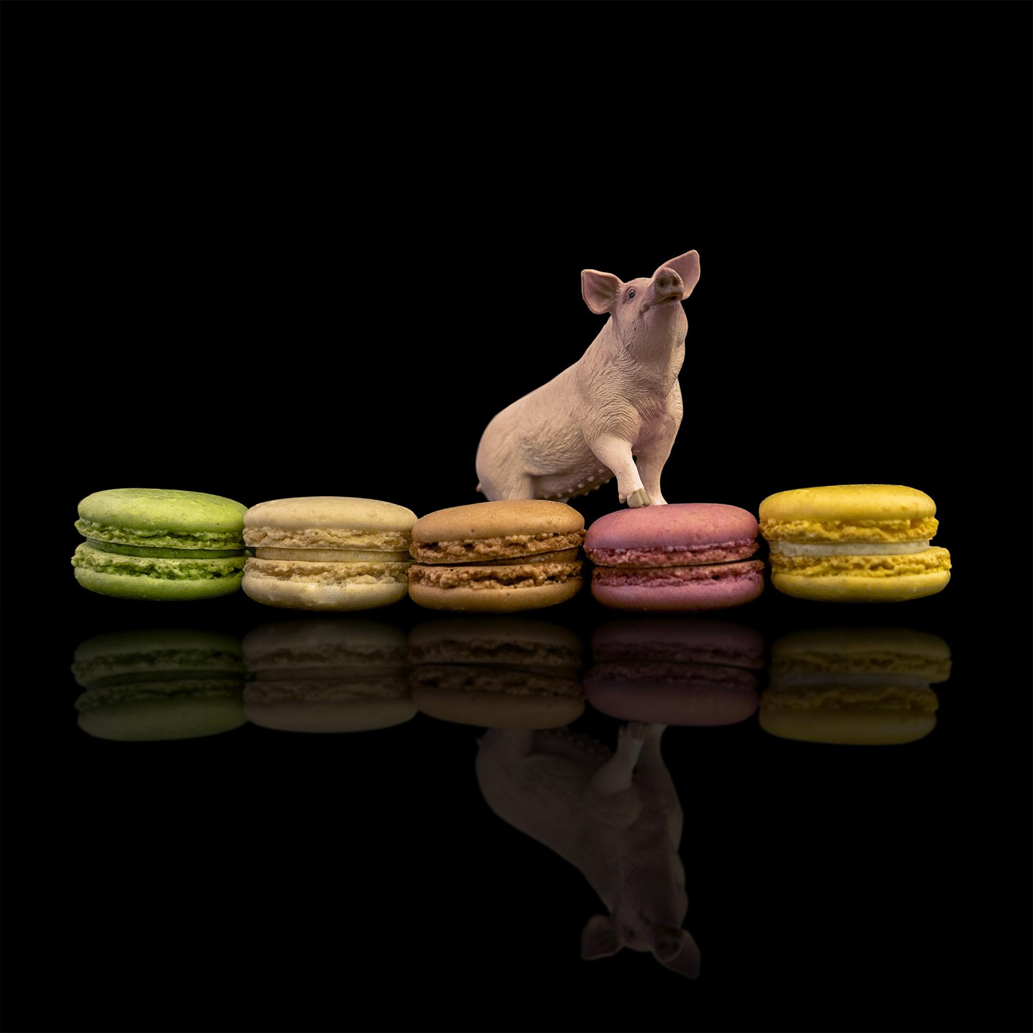 Melinda Isachsen JANIS Photography & Fine Art Pig & Macarons