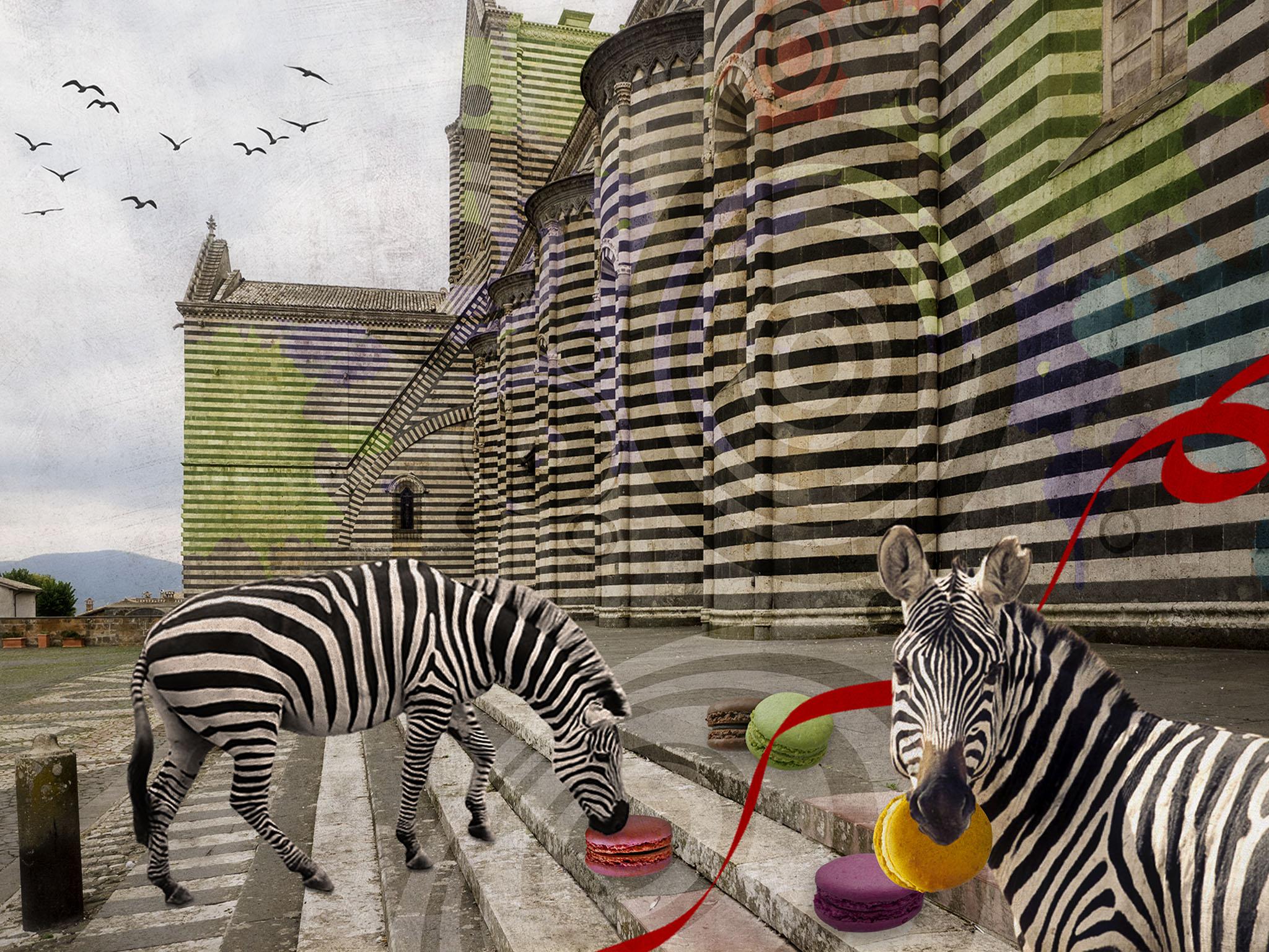 Melinda Isachsen JANIS Photography & Fine Art Zebra & Macarons