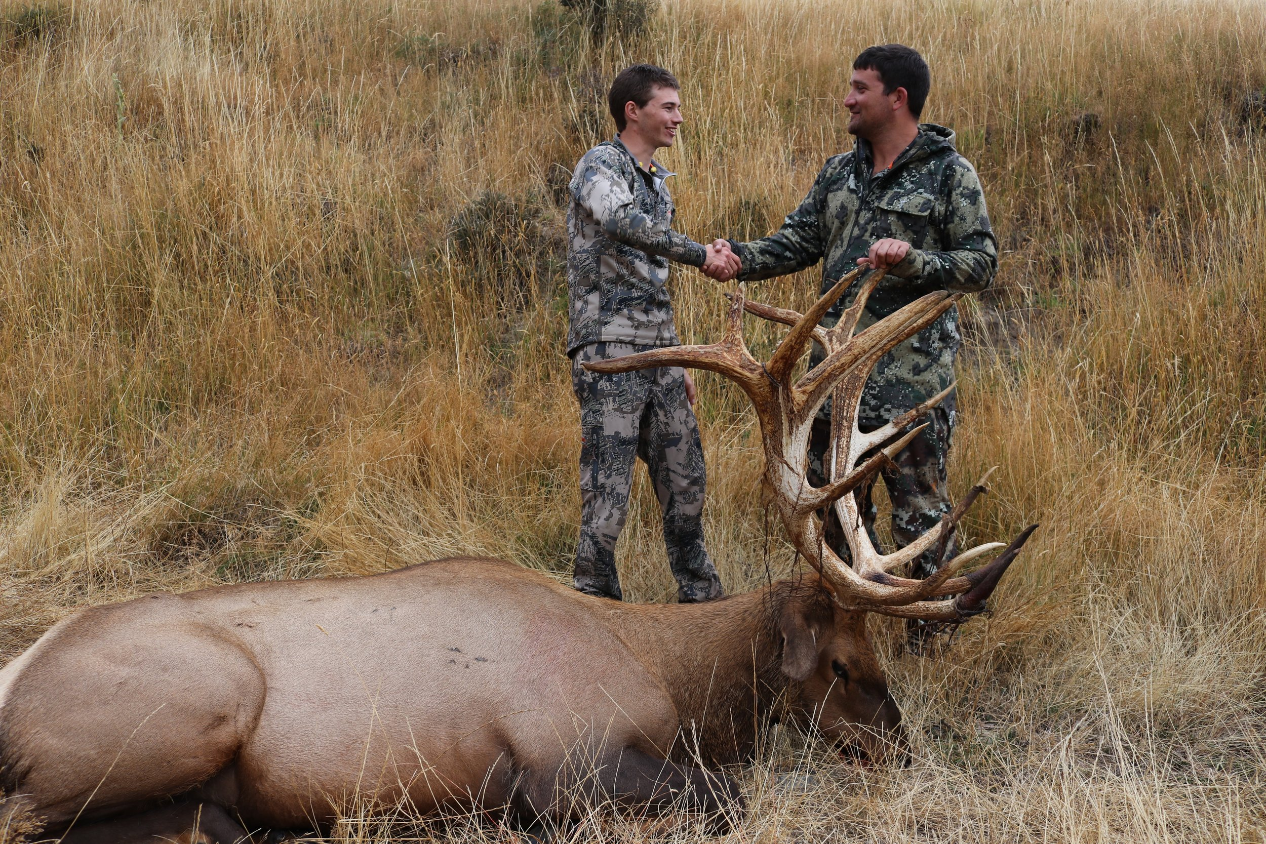 SIlver Class Elk
