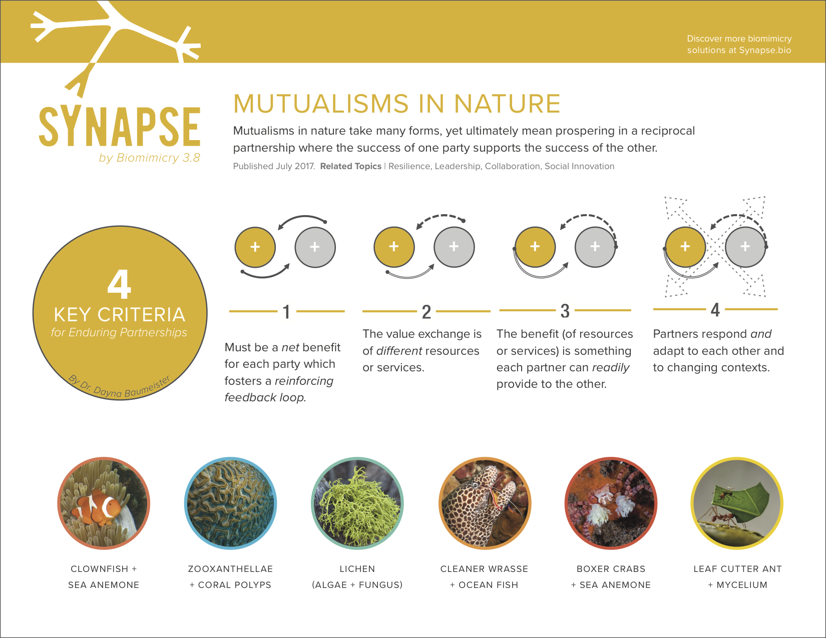 Download this shareable infographic capturing the four key criteria of mutualisms in nature!