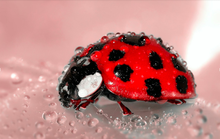 Lady bug exoskeleton protects from environmental factors yet the processes and materials involved in its production, use, and post-use management are life-friendly.