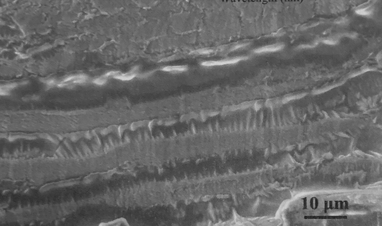 """""""For each layer, there are numerous serrations… it is believed that the bonding force between layers depends on the friction of these fibers. There are no other materials bonding the layers."""" (Sun, J., Wu, W., Song, Z. et al. Bio-inspirations for the Development of Light Materials based on the Nanomechanical Properties and Microstructures of Beetle Dynastes tityus, J Bionic Eng (2019) 16: 154. https://doi.org/10.1007/s42235-019-0014-7)"""
