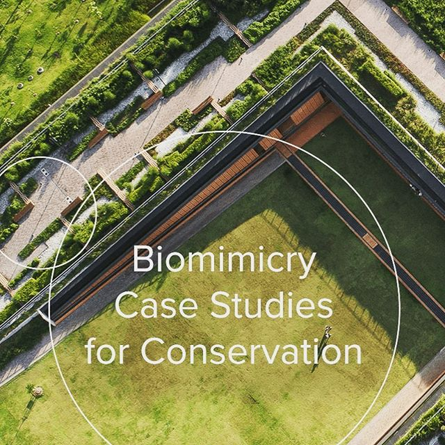 We often share case studies traditionally applied to product design, but in celebration of Earth Day today, we're excited to share case studies of a different sort—biomimicry solutions and research directly applied to conservation. Hopefully these 6 examples will inspire you to ask probing questions and help bring biomimicry to this critically important work. Happy Earth Day! • https://synapse.bio/blog/conservation-efforts-inspired-by-nature (link also in bio) 📸 : PanoramaStudio • #earthday #biomimicry #biomimicry38 #conservation #sustainability #bioinspired #sustainabledesign #earthday2019