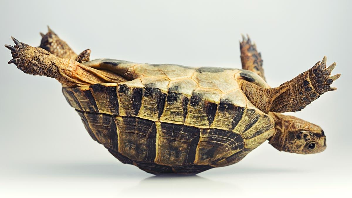 Turtle on Back.jpg