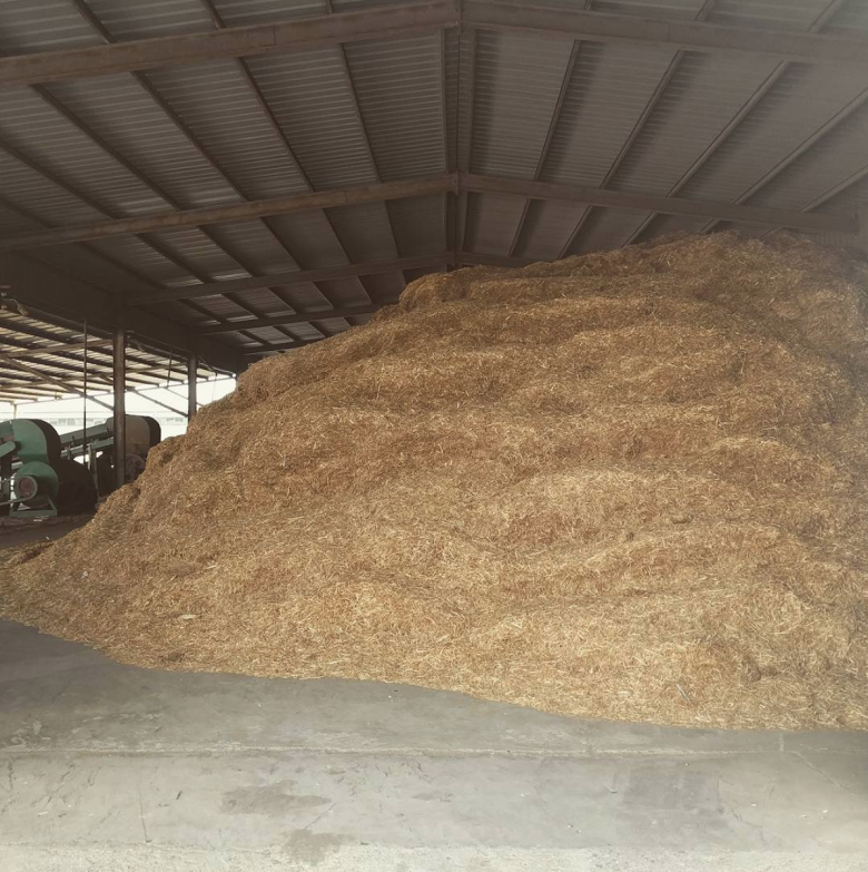 Wheat straw waste before production