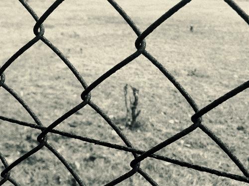 WHEN BLACK DOG ATTACKS | NIKONOYUMEE ニコの写真