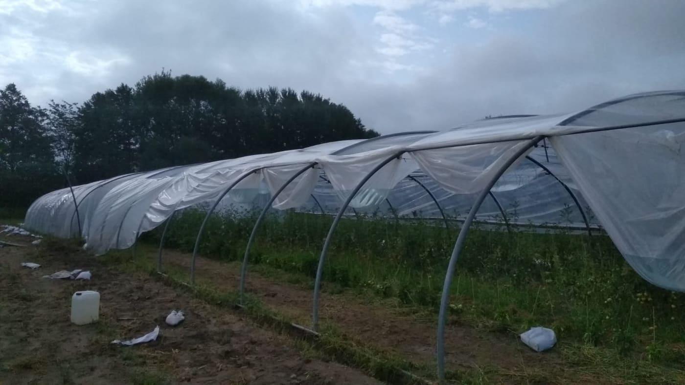 Der Sturm hat Spuren hinterlassen. Doch die Tomaten sind sicher