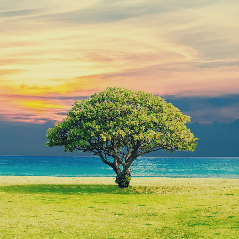 tree_Square_1000.jpg